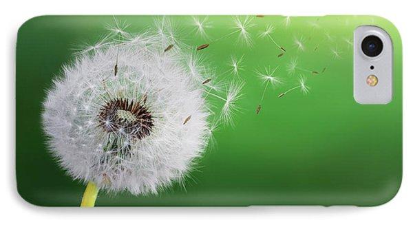 Dandelion Seed IPhone Case by Bess Hamiti