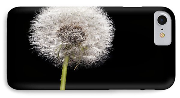 Dandelion Seedhead Phone Case by Steve Gadomski