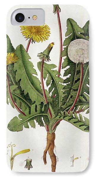 Dandelion IPhone Case by William Kilburn