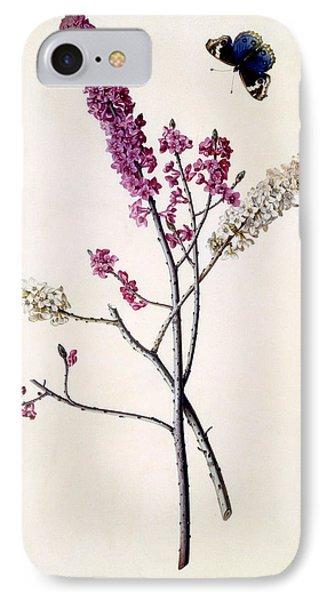 Daphne Mezereum With Butterfly IPhone Case by Georg Dionysius Ehret