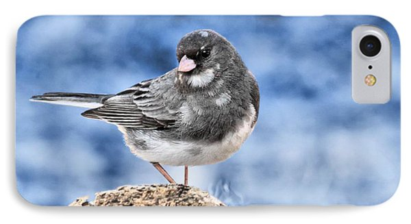 IPhone Case featuring the photograph Dark-eyed Junco by Debbie Stahre