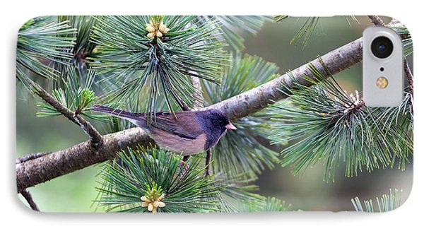 Dark-eyed Junco On A Pine Tree Phone Case by David Gn
