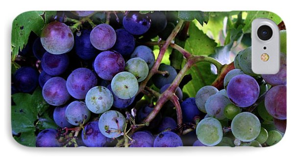IPhone Case featuring the photograph Dark Grapes by Carol Sweetwood