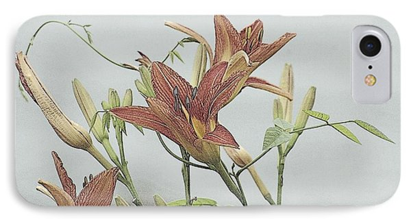 Daylilly Dreaming IPhone Case