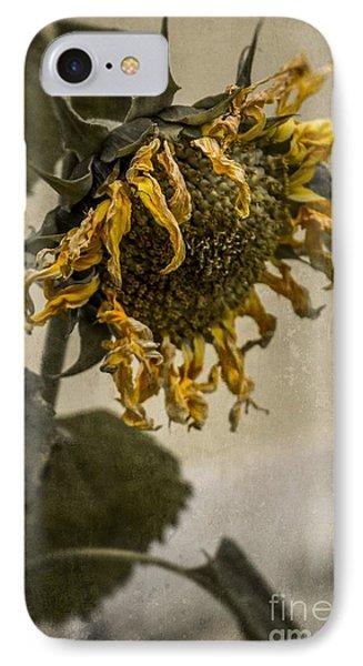 Dead Sunflower IPhone Case by Carlos Caetano