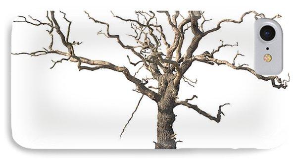 Dead Tree IPhone Case by Amanda Elwell