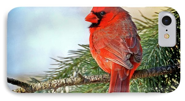 IPhone Case featuring the photograph December's Cardinal by Rodney Campbell