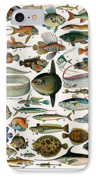 Decorative Print Of Poissons By Demoulin IPhone Case by American School