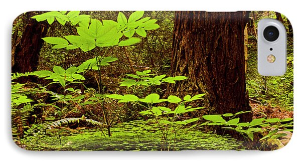 Deep In The Forest-lime Klin IPhone Case by Gary Brandes