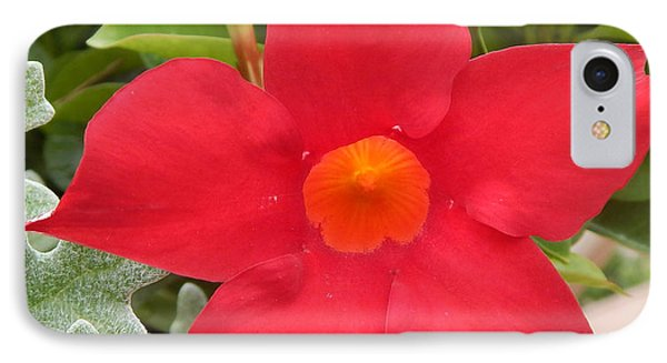 Mandevilla Deep Red Flower IPhone Case