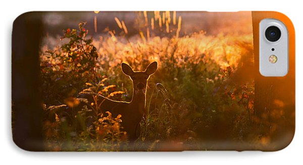 Deer At Ojibway Park IPhone Case by Cale Best