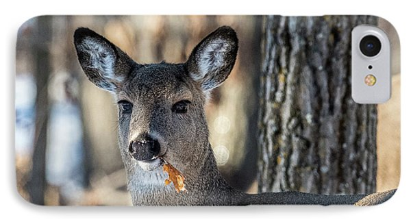 IPhone Case featuring the photograph Deer At The Salad Bar by Paul Freidlund