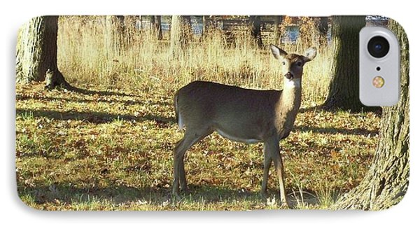 Deer At Valley Forge IPhone Case