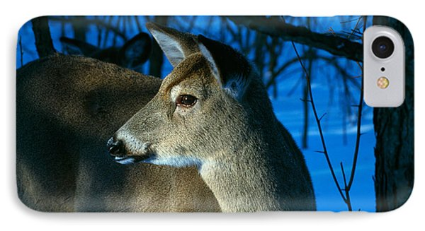 Deer Doe In Snowy Woods, Close IPhone Case