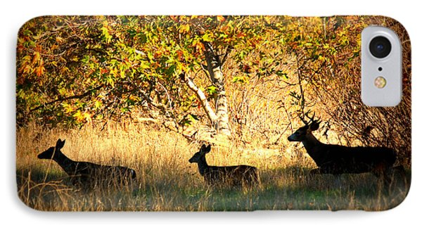 Deer Family In Sycamore Park IPhone Case by Carol Groenen