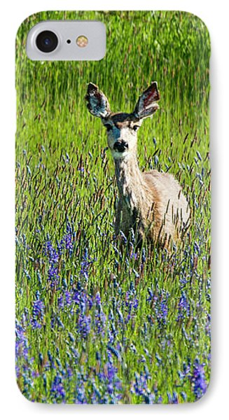 Deer In Lupine IPhone Case by Jean Noren