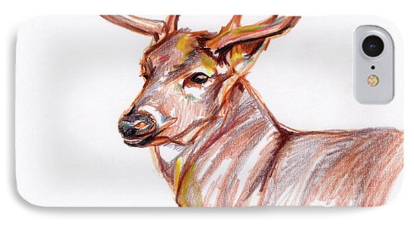 Deer In Pencil IPhone Case by Anne Seay