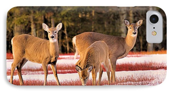 Deer In Snow IPhone Case by Debbie Stahre