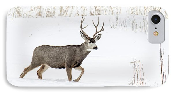 Deer In The Snow IPhone Case by Rebecca Margraf