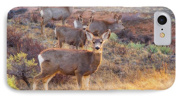 IPhone Case featuring the photograph Deer In The Sunlight by Darren White