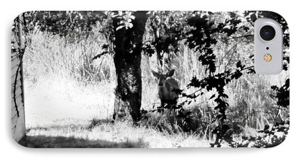 Deer In The Woods Of Dutch Flat IPhone Case