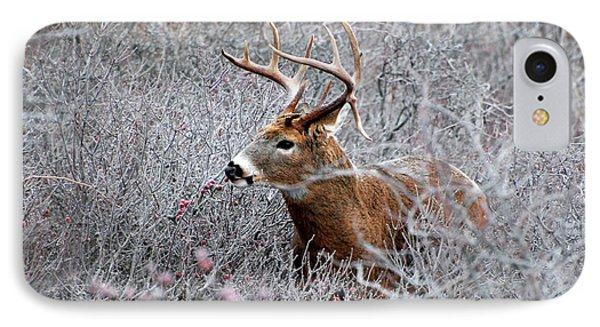 Deer On A Frosty Morning  Phone Case by Nancy Landry