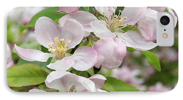 IPhone Case featuring the photograph Delicate Soft Pink Apple Blossom by Gill Billington
