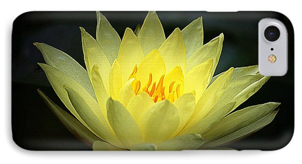 Delicate Water Lily IPhone Case by Lori Seaman