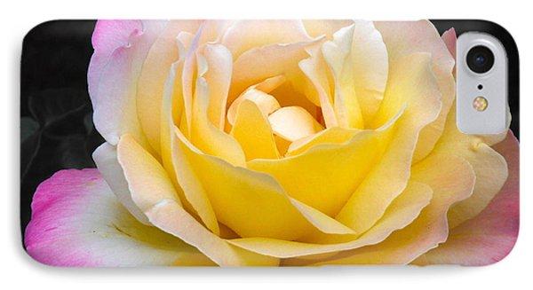 Delightful Blushing Rose  IPhone Case