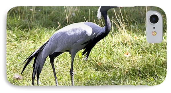 IPhone Case featuring the photograph Demoiselle Crane by Teresa Zieba