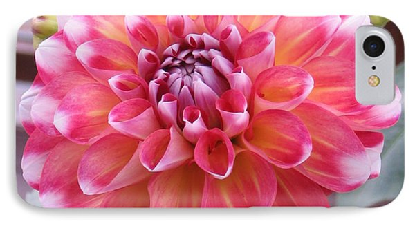 Denali Dahlia IPhone Case by Karen J Shine
