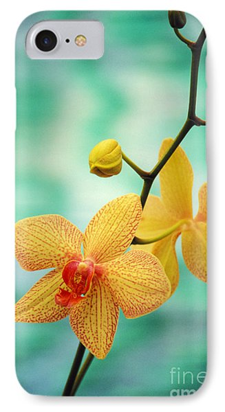 Dendrobium IPhone Case by Allan Seiden - Printscapes