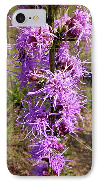 IPhone Case featuring the photograph Dense Blazing Star by Scott Kingery