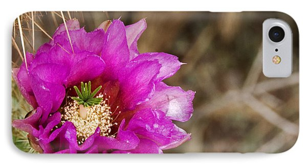 Desert Bloom Phone Case by Anthony Citro