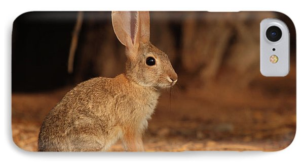 Desert Cottontail Posing IPhone Case by Max Allen