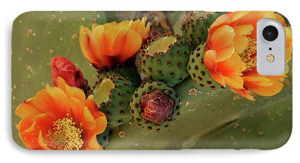 IPhone Case featuring the photograph Desert Flame by Lucinda Walter
