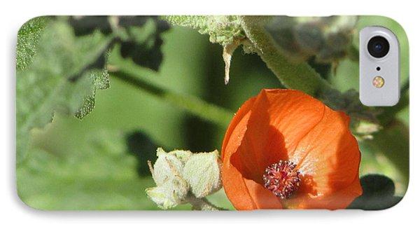 Desert Globemallow Bloom 215 IPhone Case by En-Chuen Soo