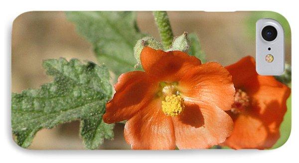 Desert Globemallow Bloom 220 IPhone Case by En-Chuen Soo