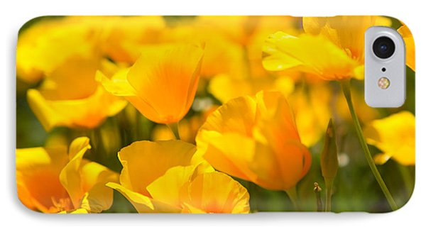 Desert Poppy Flowers In Bloom IPhone Case by Panoramic Images