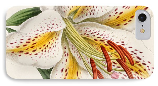 Detail Of A Lily IPhone Case by James Andrews