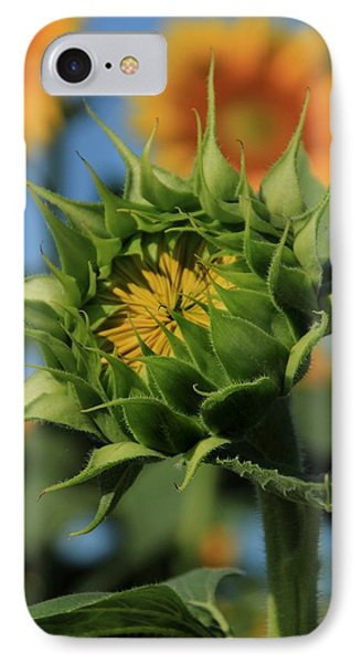 IPhone Case featuring the photograph Developing Petals On A Sunflower by Chris Berry