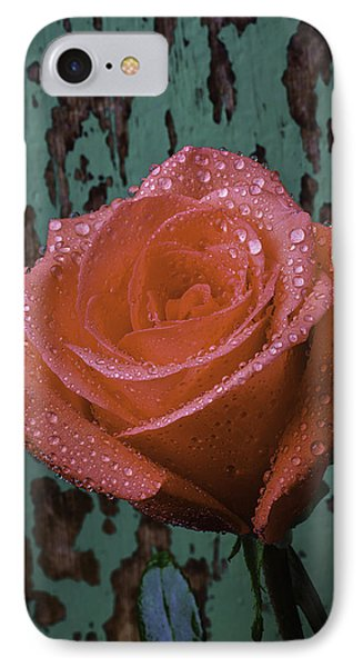Dew Covered Rose IPhone Case by Garry Gay