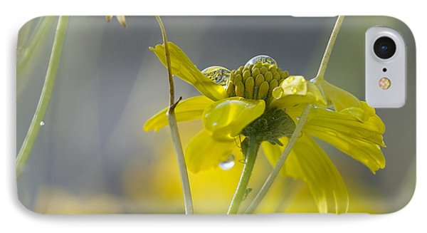 Dew On A Desert Bloom IPhone Case by Sue Cullumber