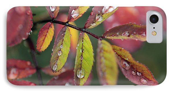Dew On Wild Rose Leaves In Fall Phone Case by Darwin Wiggett
