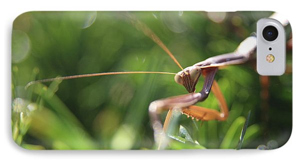 Discovering The Praying Mantis  IPhone Case