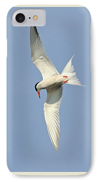 IPhone Case featuring the photograph Dive by Tony Beck