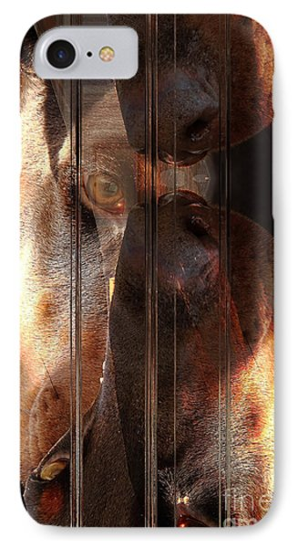 Doberman Pincher IPhone Case