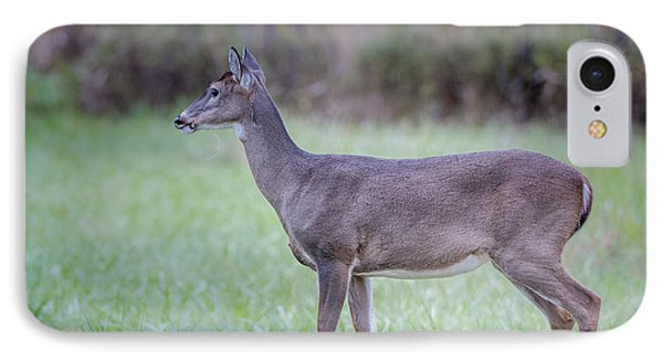 IPhone Case featuring the photograph Doe In Cades Cove by Tyson Smith