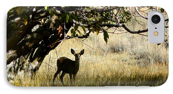 Doe In The Orchard IPhone Case by Lisa Knechtel