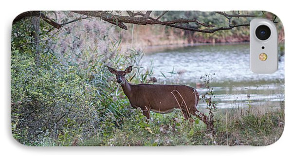 IPhone Case featuring the photograph Doe Under Arching Branches by Chris Bordeleau